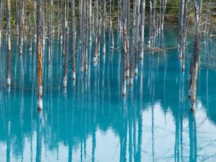 美瑛の青い池の写真素材 [FYI00430533]
