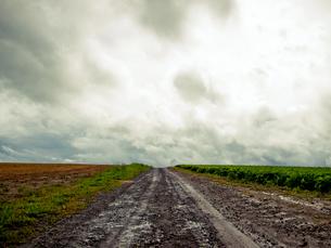 道の写真素材 [FYI00430536]