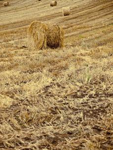 牧草ロールの写真素材 [FYI00430542]
