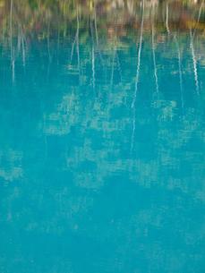 美瑛の青い池の写真素材 [FYI00430544]