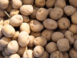 ジャガイモの写真素材 [FYI00430547]