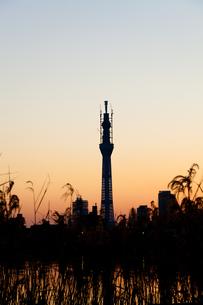 夕暮れの東京の写真素材 [FYI00430587]