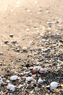 貝殻の写真素材 [FYI00430594]