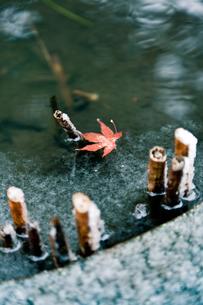 雪と紅葉の写真素材 [FYI00430599]