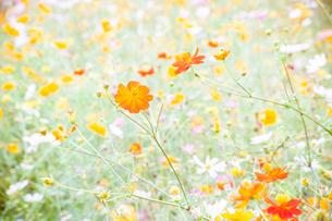 花野の写真素材 [FYI00430650]