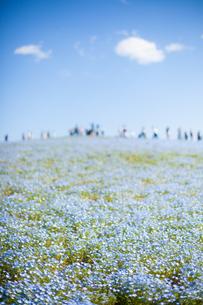 青い花と青い空の写真素材 [FYI00430663]