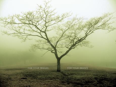 霧の中の一本の木の素材 [FYI00430677]