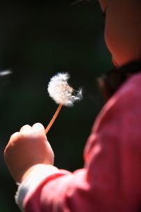 タンポポの種を吹く少女の写真素材 [FYI00430696]