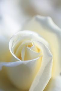 純白の写真素材 [FYI00430704]