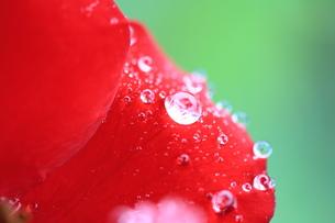 水玉の写真素材 [FYI00430707]