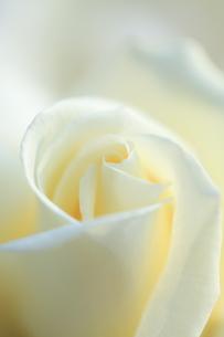 白無垢の写真素材 [FYI00430720]
