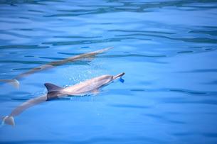イルカの写真素材 [FYI00430725]