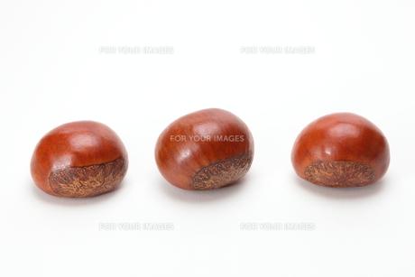 栗の素材 [FYI00430840]