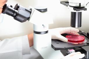 顕微鏡観察の写真素材 [FYI00430876]