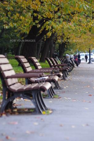 秋の公園の写真素材 [FYI00430933]