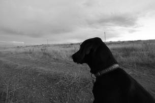 追いかけたい衝動を抑える犬の写真素材 [FYI00431249]