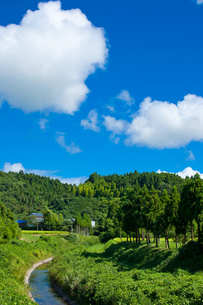 田舎で過ごす真夏の風景 の写真素材 [FYI00431832]