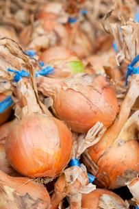 収穫した玉ねぎの写真素材 [FYI00431860]