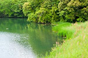 新緑の野池の写真素材 [FYI00431871]