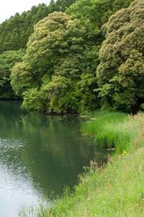 山間部の野池の写真素材 [FYI00431876]