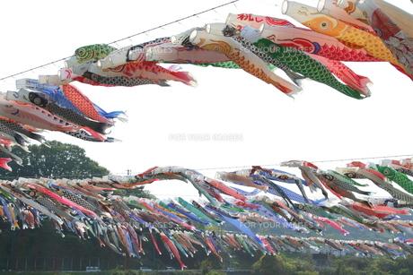 1200匹の鯉のぼりの写真素材 [FYI00432608]