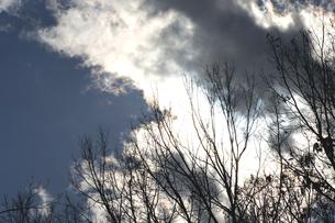 冬の晴れ間の写真素材 [FYI00432859]