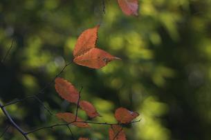 木の葉の素材 [FYI00432860]