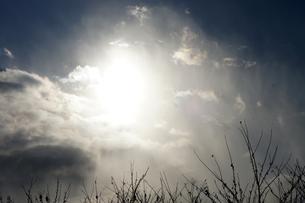 冬の日の幻想の素材 [FYI00432881]