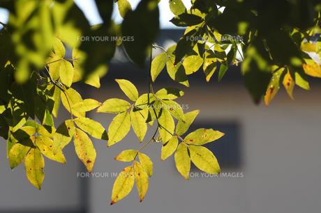 冬の日差しの写真素材 [FYI00432898]