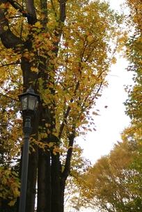 秋の風景の素材 [FYI00432925]