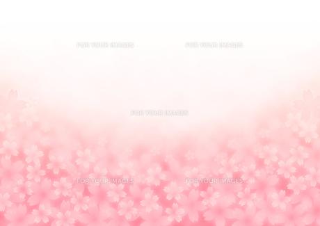 桜イメージの写真素材 [FYI00433050]