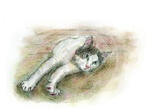 寝ころんで のびをする猫の写真素材 [FYI00433051]