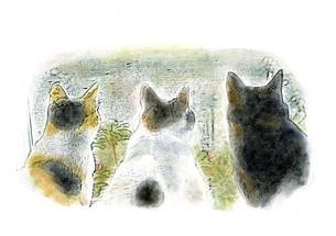 仲良く 外を見る 三匹の猫の写真素材 [FYI00433071]