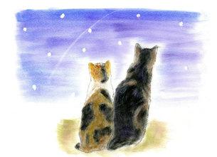 流れ星に願いをこめる 二匹の猫の写真素材 [FYI00433072]