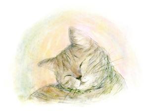 日だまりの中で 気持ちよさそうに目を閉じる 猫の写真素材 [FYI00433073]