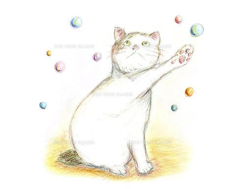 シャボン玉を捕まえようとする猫の写真素材 [FYI00433081]