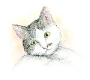幸せを運んできた猫の写真素材 [FYI00433084]