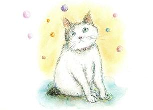 シャボン玉の中 あどけない表情の しっぽの短い白猫の写真素材 [FYI00433098]
