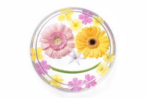 ガーベラ花の顔の写真素材 [FYI00433121]