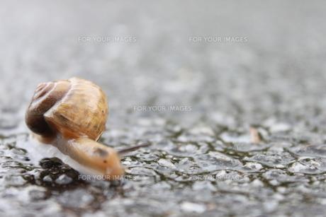 雨降りとカタツムリの素材 [FYI00433301]