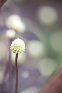 植物の素材 [FYI00433881]