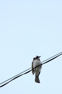 小鳥の素材 [FYI00433946]