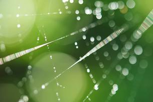 蜘蛛の糸に付いた雨粒の写真素材 [FYI00434604]