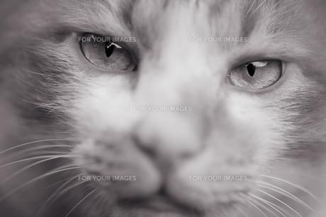猫の目の写真素材 [FYI00434608]