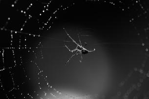雨上がりの蜘蛛と蜘蛛の巣の写真素材 [FYI00434689]