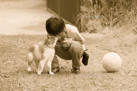 猫と子供とサッカーボールの写真素材 [FYI00434802]