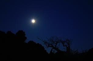 溶岩と立ち枯れた木々のシルエットと月の素材 [FYI00434812]