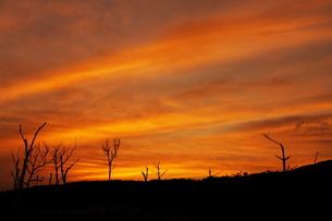 夕焼け空と立ち枯れた木々の素材 [FYI00434846]