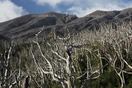 三宅島雄山と立ち枯れた木々の素材 [FYI00434888]