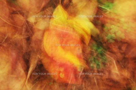 落ち葉とクローバーの素材 [FYI00434902]